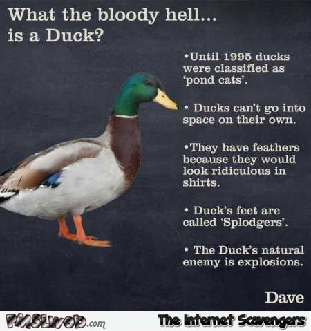 What the bloody hell is a duck humor  - Tuesday PMSL @PMSLweb.com