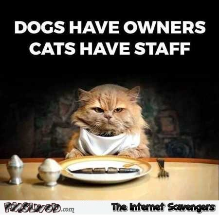 Cats have staff humor @PMSLweb.com