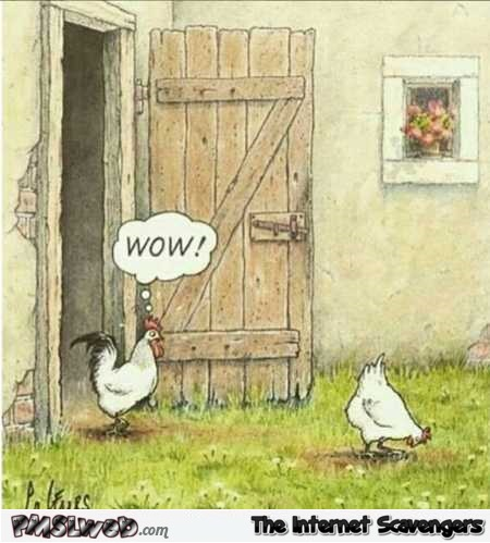 Rooster would tap that funny cartoon