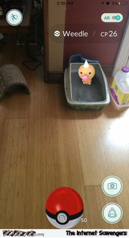 Pokemon appears in kitty litter Pokemon Go humor @PMSLweb.com