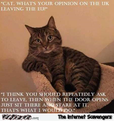 Funny cat's opinion about Brexit @PMSLweb.com