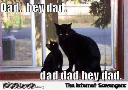 Dad hey dad funny cat meme @PMSLweb.com