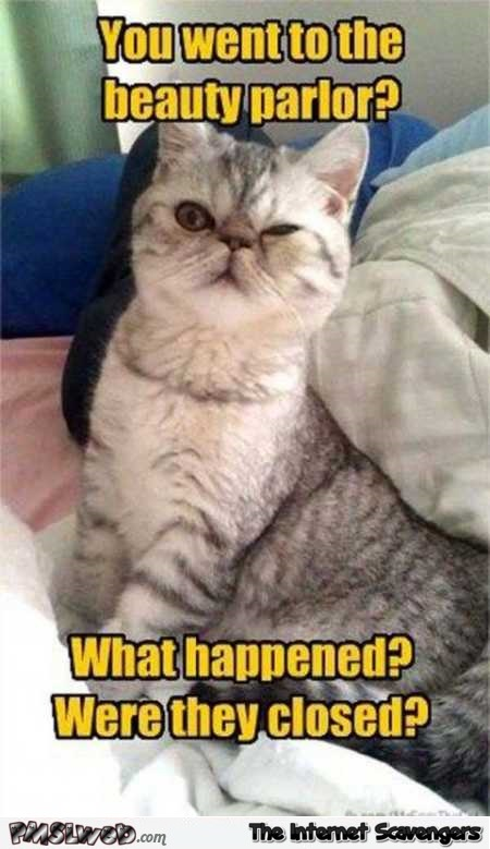 You went to the beauty parlor sarcastic cat meme @PMSLweb.com