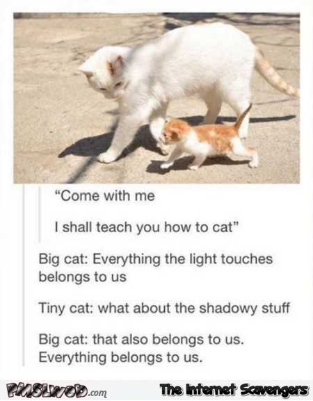 Cat everything belongs to us humor @PMSLweb.com