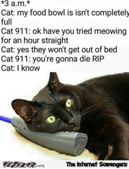 Cat 911 call humor @PMSLweb.com