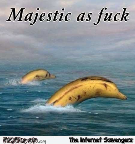 Funny majestic as f*ck bananas