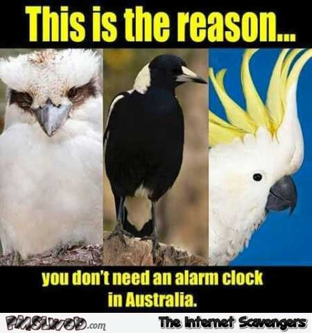 Why you don't need an alarm clock in Australia meme – TGIF hilarious pictures @PMSLweb.com