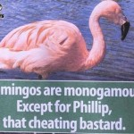 Flamingos are monogamous humor – Monday YLYL pictures @PMSLweb.com