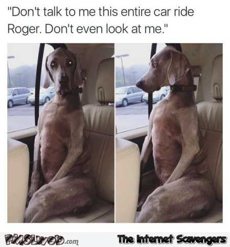 Don't talk to me the entire car ride funny dog meme @PMSLweb.com