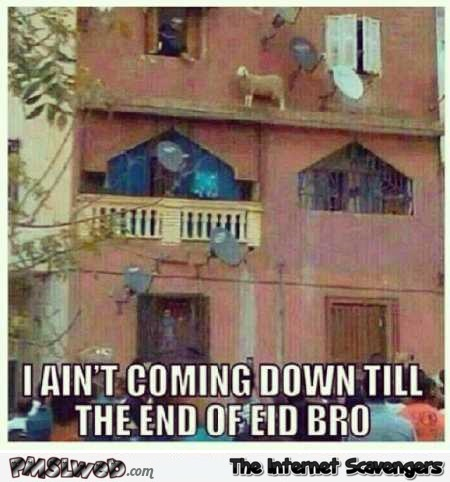 Sheep not coming down until the end of Eid funny meme @PMSLweb.com