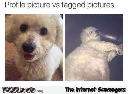 Profile picture vs tagged picture dog meme – Silly Tuesday pictures @PMSLweb.com