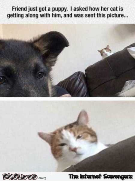 Cat is not happy about new puppy funny meme @PMSLweb.com