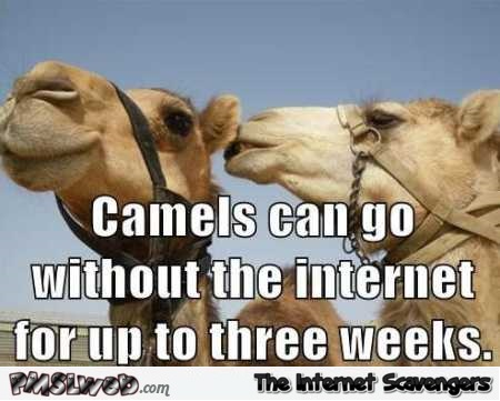 Camels can go without internet funny meme – Friday comedy club @PMSLweb.com