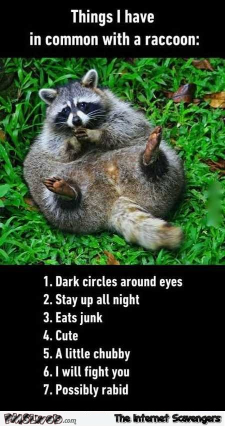 Things I have in common with a raccoon humor @PMSLweb.com