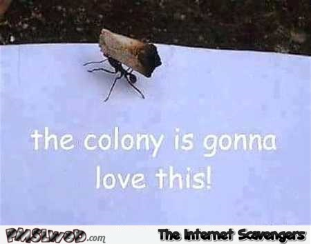 The colony is going to love this funny ant meme @PMSLweb.com