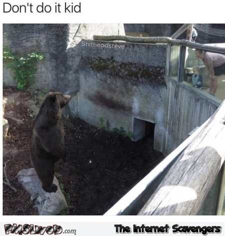 Don't do it kid funny bear meme @PMSLweb.com