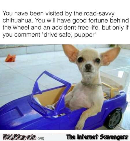 You have been visited by the road savvy Chihuahua funny meme @PMSLweb.com