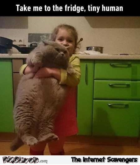 Take me to the fridge tiny human funny cat meme @PMSLweb.com