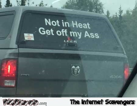 Not in heat get off my ass funny bumper sticker @PMSLweb.com