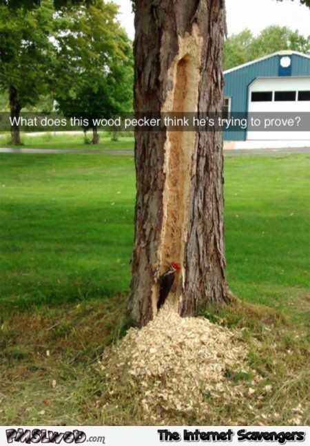 What is this wood pecker trying to prove funny meme @PMSLweb.com