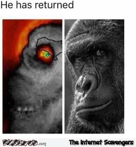 Harambe has returned funny hurricane meme – Funny Hump day memes @PMSLweb.com