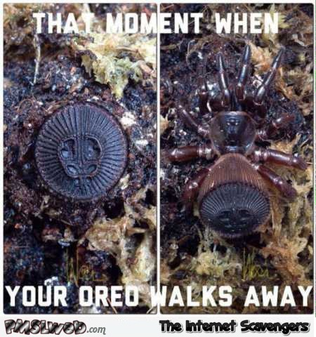 That moment when your oreo walks away spider meme @PMSLweb.com