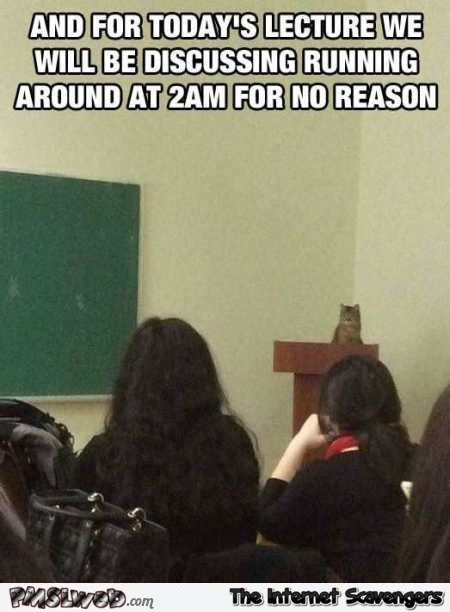 Cat giving class a lecture funny meme