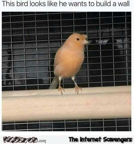 This bird looks like he wants to build a wall funny meme @PMSLweb.com