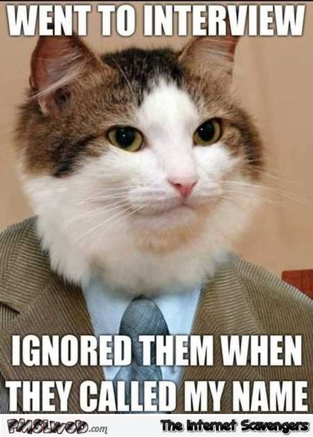 Cat goes to an interview funny meme – Tuesday chuckles zone @PMSLweb.com