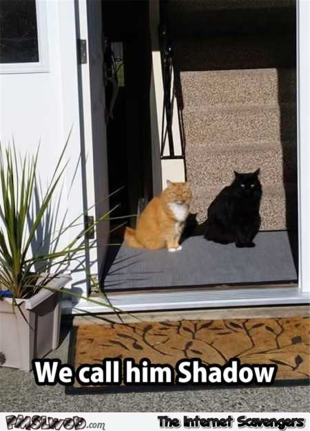 We call our cat shadow funny meme @PMSLweb.com