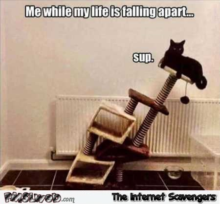 Me while my life is falling apart funny meme @PMSLweb.com
