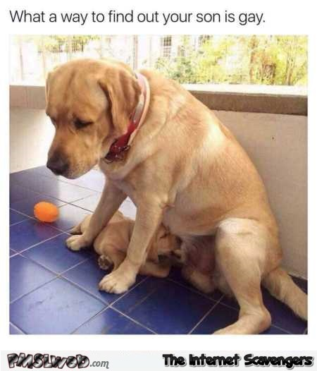 Dog finding out his son is gay the hard way funny meme @PMSLweb.com