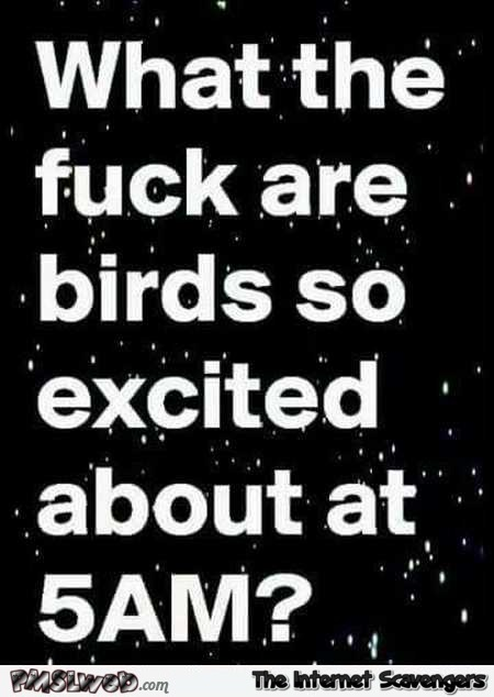 What are birds so excited about at 5am sarcastic humor @PMSLweb.com