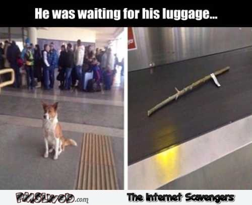Dog waiting for his luggage at the airport funny meme – Wednesday chuckle zone @PMSLweb.com