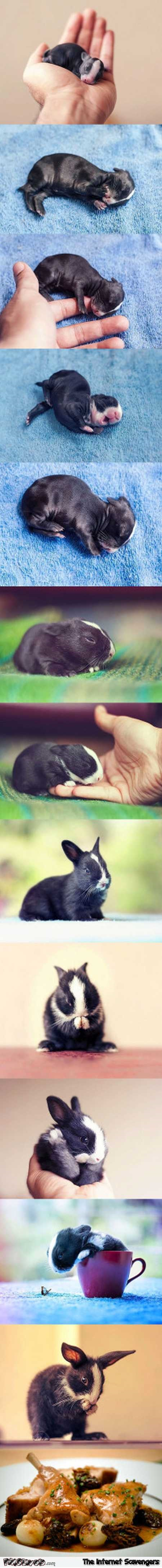 Funny inappropriate baby rabbit humor @PMSLweb.com