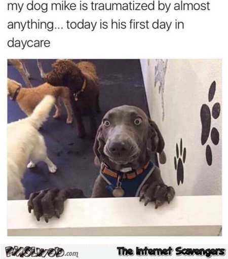 Dog on his first day in daycare funny meme @PMSLweb.com