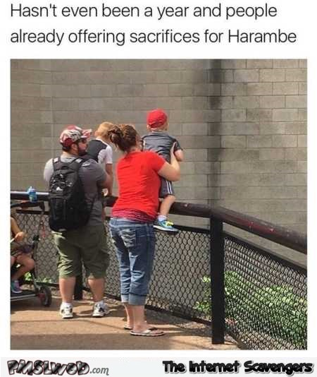 People are already offering Harambe sacrifices funny meme @PMSLweb.com