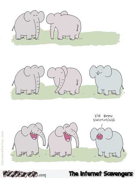 Elephant went swimming funny cartoon @PMSLweb.com