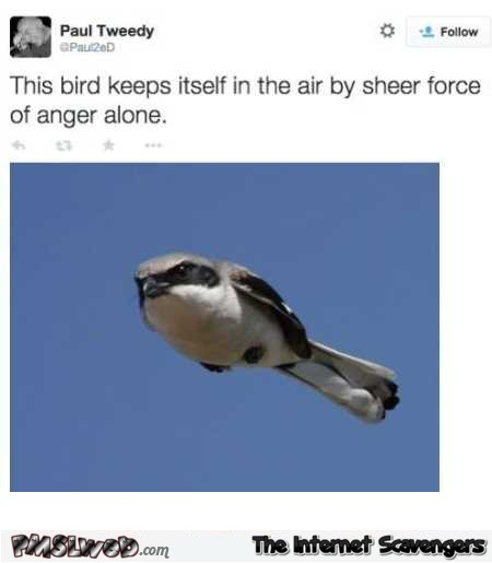Bird keeps itself in the air with sheer force of anger funny tweet – Funny Thursday memes @PMSLweb.com