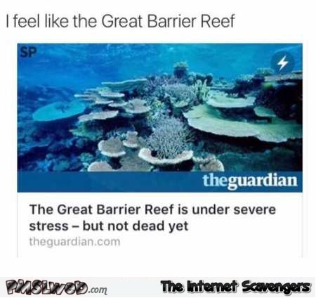 I feel like the great barrier reef funny meme
