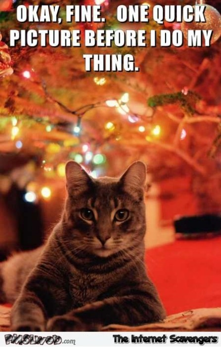 One quick picture before I knock the Christmas tree down funny cat meme