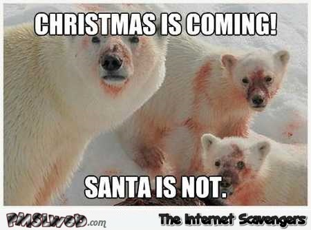 Christmas is coming funny polar bear meme @PMSLweb.com