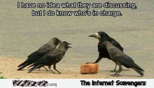 I know which bird is in charge funny meme @PMSLweb.com