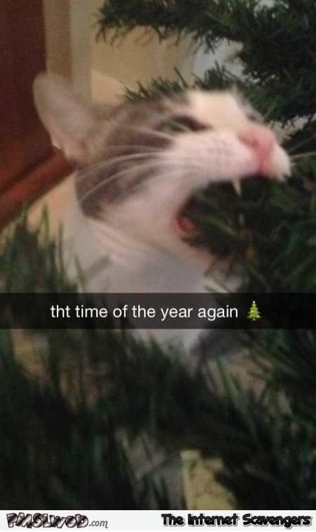 It's that time of the year again funny Christmas cat meme @PMSLweb.com