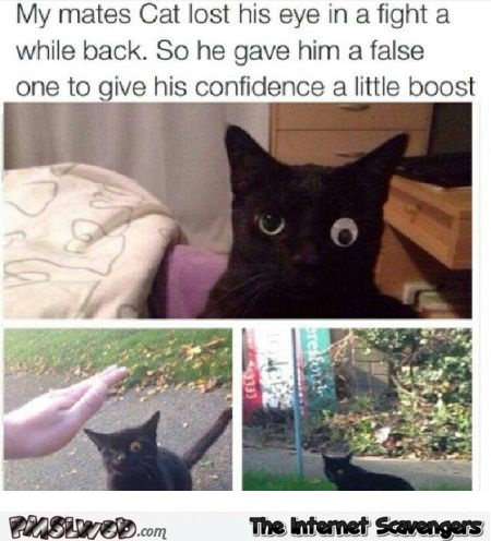 Cat lost his eye in a fight funny meme @PMSLweb.com