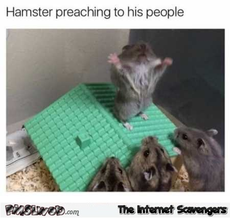 Hamster preaching to his people funny meme @PMSLweb.com