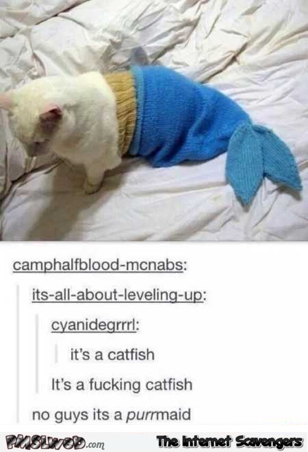 Funny purrmaid comment
