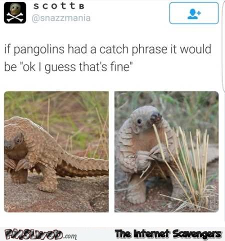 What the pangolin catch phrase would be funny tweet @PMSLweb.com