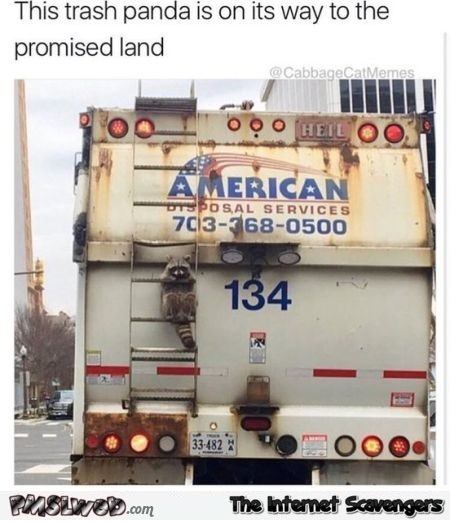 Trash panda on its way to the promised land funny meme @PMSLweb.com