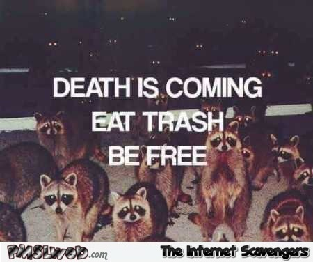 Death is coming funny Raccoon meme – Humorous Internet nonsense @PMSLweb.com